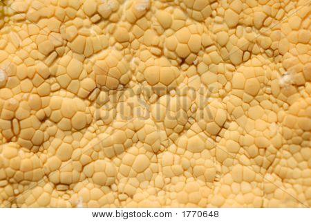 Starfish Texture