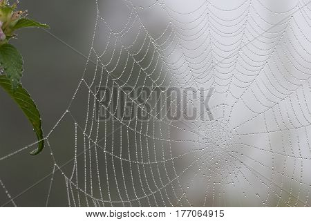 Spider web with dew drops close-up background