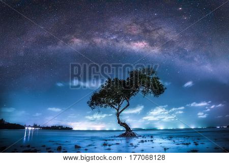 The milky way over big tree in tropical beach with night sky Thailand