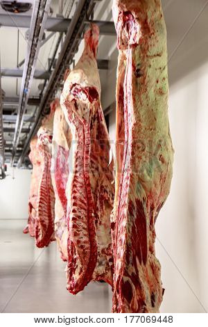 The Meat Processing Plant. Carcasses Of Beef Hang On Hooks.