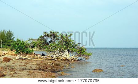 The calm tropical beach. Land, trees, sky and sea.