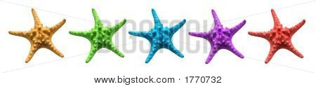 Multi Colored Starfishes
