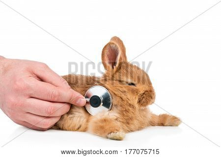 Hand of a person hearing the bunny with the stethoscope isolated on white