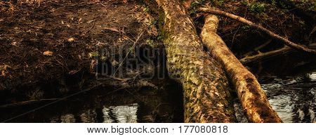 A forest bridge over a stream the beauty of a spring nature
