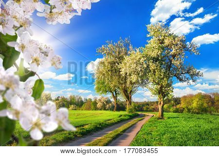 Idyllic rural landscape in spring: green meadow blossoming trees blue sky and rays of sunlight framed with white blossoms