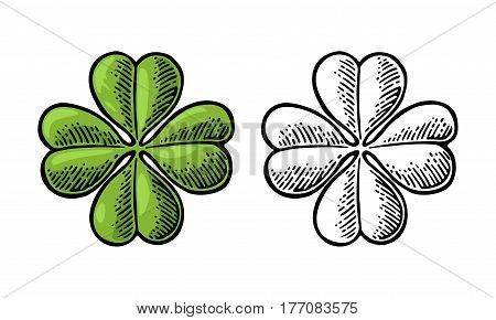 Good luck four leaf clover. Vintage color and black vector engraving illustration for info graphic, poster, web. Isolated on white background.