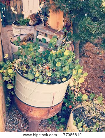 Large flower pot with hanging plant made from old repurposed white and brown rusting washing machine.