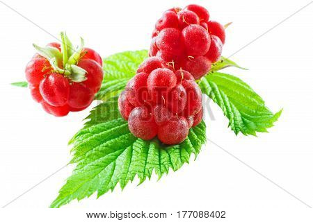 wild fresh raspberries with leaf isolated on white background