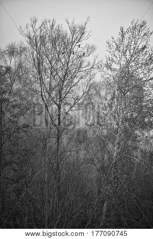 Toned Black And White Landscape Of Foggy Forest Scene