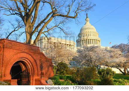 United States Capitol Building in springtime - Washington DC USA