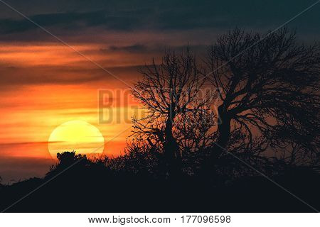 High constrast backlight sunset scene landscape with dry tree and sun as main subjects poster