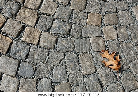 A fragment of a cobblestone pavement with dried oak leaf