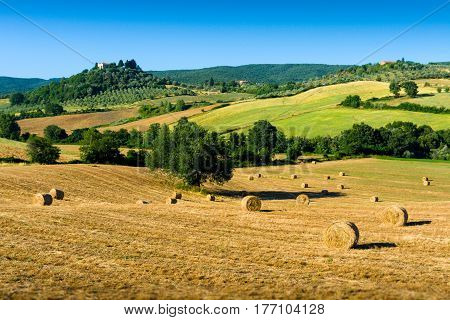 Haycock and trees in sunny tuscan countryside Italy.