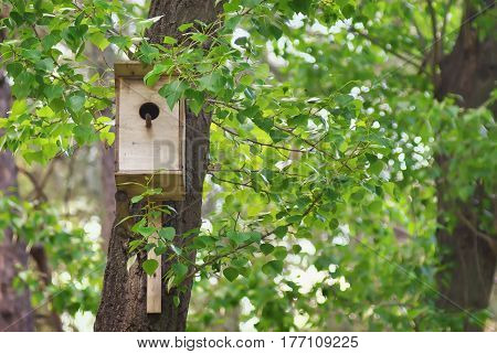 Birdhouse in spring forest. Birdhouse on a tree