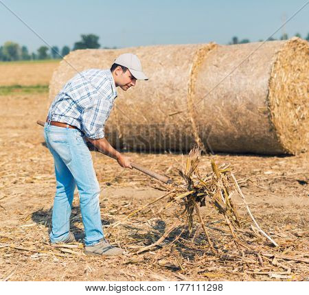 Farmer manually harvesting dried hay in his field