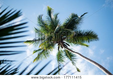 Yoga tour by Yantra Kerala India sky and palm
