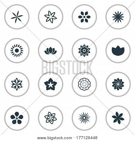 Vector Illustration Set Of Simple Blossom Icons. Elements Saffron, Pattern, Camomile And Other Synonyms Crocus, Pansy And Chamomile.