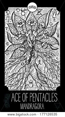 Ace of pentacles. Mandragora. Minor Arcana Tarot card. Fantasy line art illustration. Engraved vector drawing. See all collection in my portfolio set