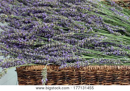 Closeup of a Brown Woven Basket Full of Fresh Picked Lavender