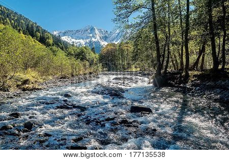 Mountain river. Wildlife. Summer. Far East, Sakhalin Island, Russia.