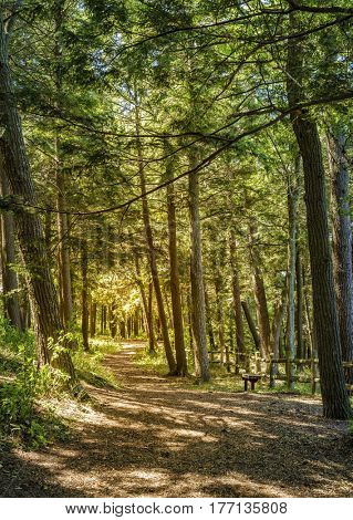 Scenic walking trail in the park in Charlevoix, Michigan