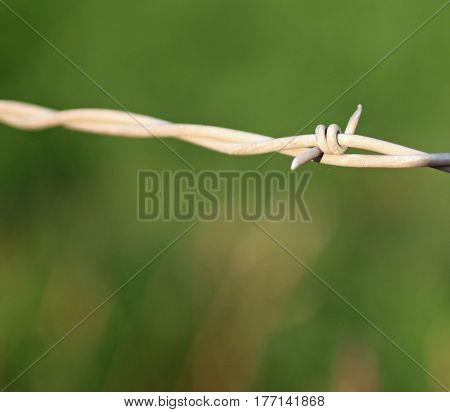Closeup of a Barb on a Barbed Wire Fence