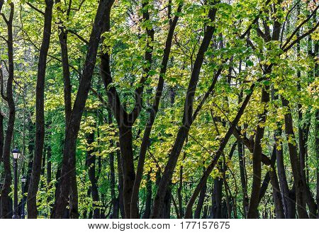 Green Spring Trees Foliage Background