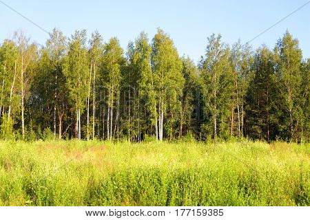 The photo of forest at spring sunny day.