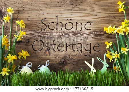 Wooden Background With German Text Schoene Ostertage Means Happy Easter. Easter Decoration Like Easter Eggs And Easter Bunny. Yellow Spring Flower Narcisssus With Gras. Card For Seasons Greetings