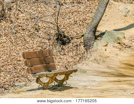 Wooden park bench on the side of a walking trail in bright sunlight with a large tree in the top of the frame and ground covered with dried brown leaves behind the bench.