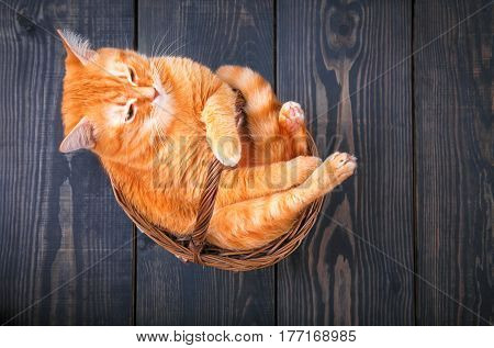 Cute red cat sitting in a basket on the wooden background.