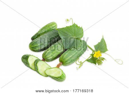 Several fresh whole cucumbers one sliced cucumber and creeping stem of cucumber with the leaves and flower on a light background