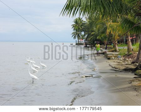 Livingston, Guatemala - 20 January 2014: The coast of Livingston on Guatemala