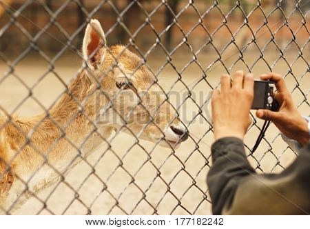Child taking picture of a baby dear inside the cage in Lahore zoo Punjab Pakistan