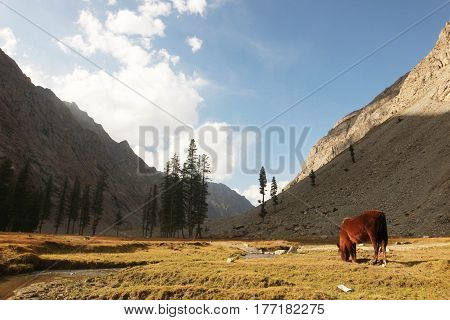 Horse eating grass in a beautiful valley in Pakistan