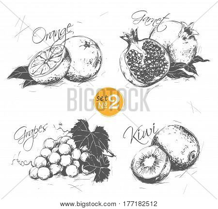 Set of fruits in a vintage style: orange pomegranate grapes kiwi. See also other sets of fruits and berries.