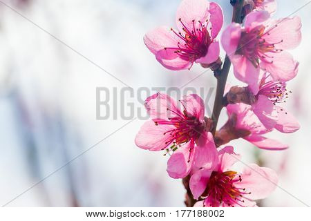 a spring pink flowers backgrounds