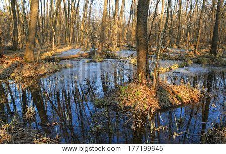 spring scene with swamp in bog