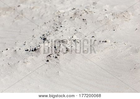 sand as a background . Photo taken by professional camera and lens