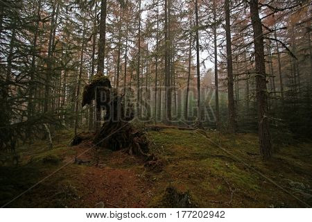 Perthshire forest, Scottish Highlands