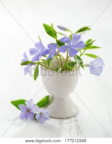 Bunch of spring flowers (Vinca) in eggshell on the white wooden plank. Easter decor.
