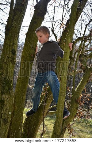 Little blond boy climbs on tree in sunlight