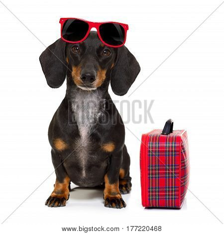 Dachshund Sausage Dog On Vacation