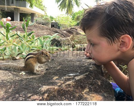 In the park under the palms of the boy's face watching the chipmunk