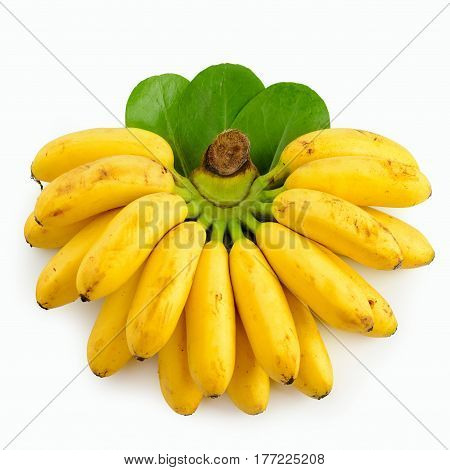 Branch of small bananas isolated on white