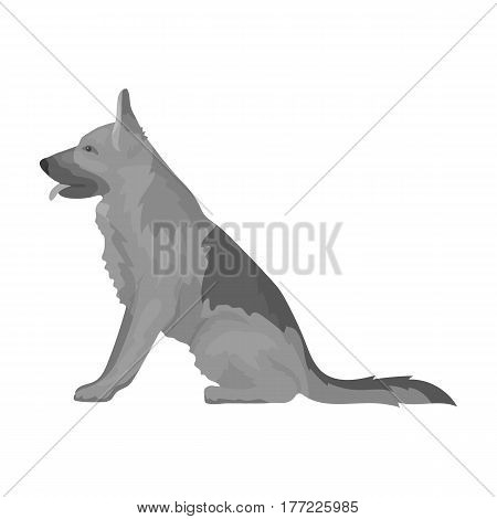 Police dog for detaining criminals. Trained shepherd for prison.Prison single icon in monochrome style vector symbol stock web illustration.