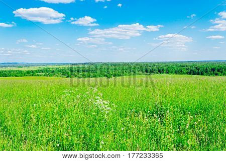 Panorama of the meadow and forest to the horizon. Summer day without people