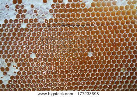 Sweet Honey In Yellow Honeycomb Frame