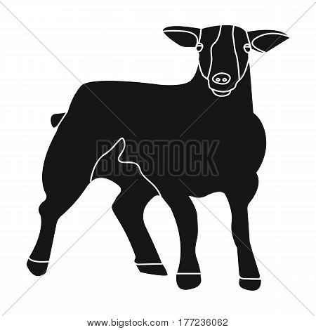 Little white mountain sheep.Scottish fold sheep.Scotland single icon in black style vector symbol stock web illustration.