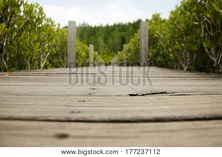 Wooden Long Brigde Pathway For People And Traveler Visit And Looking Golden Mangrove Field Thai Name